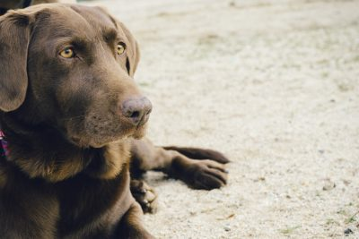 brown dog sitting on floor