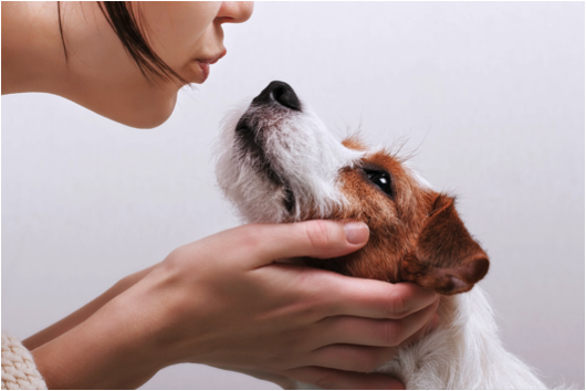 What you should know about bad dog breath.