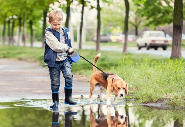 Boy with dog walks through the puddle