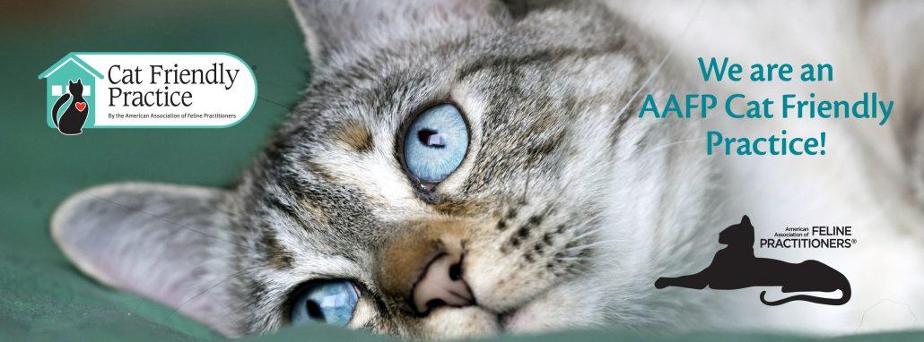 feline friendly certified
