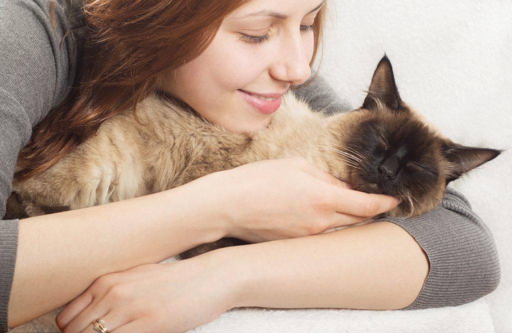 What is feline friendly