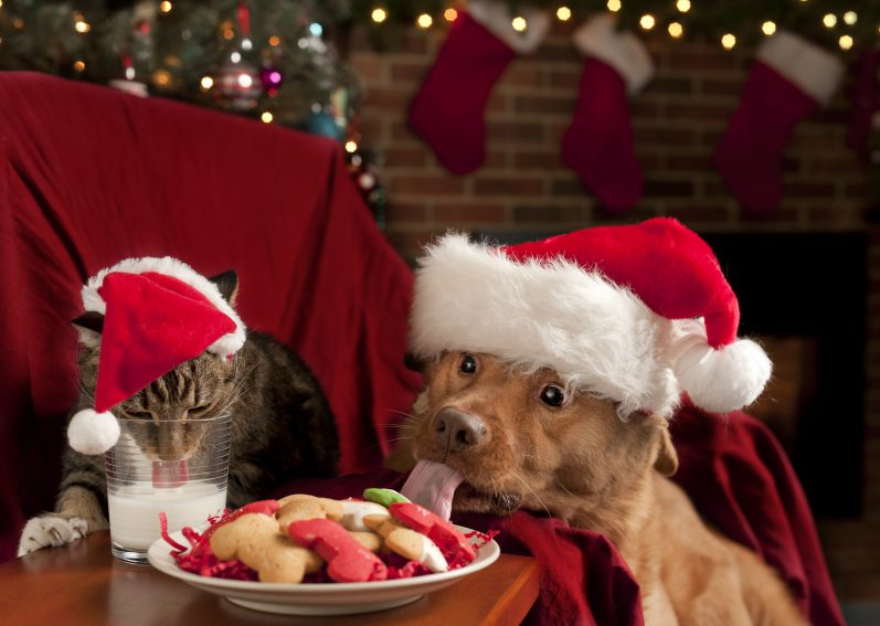 Cat and Dog eating and drinking Santa's cookies and milk.