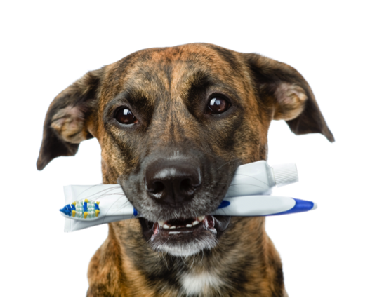 Care for your pets' teeth like your own!