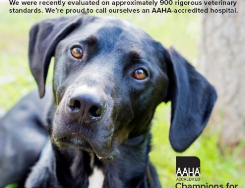 AAHA- The Standard of Veterinary Excellence