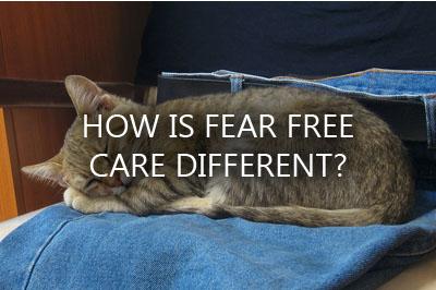 cat free care