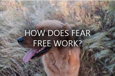 dog fear free
