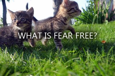 kitten fear free