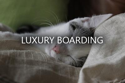 luxury boarding