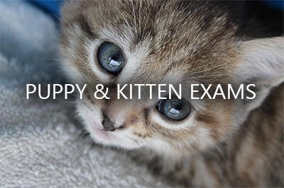 kitten_exams