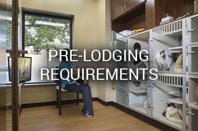 Lodging room at Loyal Companions Animal Hospital and Pet Resort