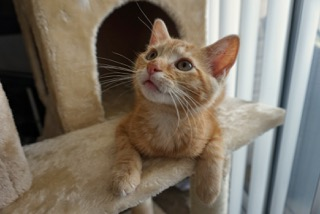 A ginger cat looking up