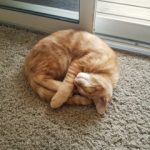 A ginger cat sleeps on a floor carpet