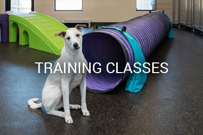 Training Class in Loyal Companions Animal Hospital and Pet Resort