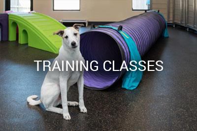 Training Class in Loyal Companions Animal Hospital and Pet Resort