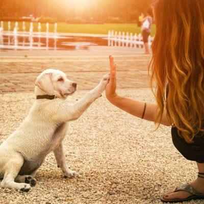 handshake between woman and pretty puppy- High Five - teamwork between girl dog