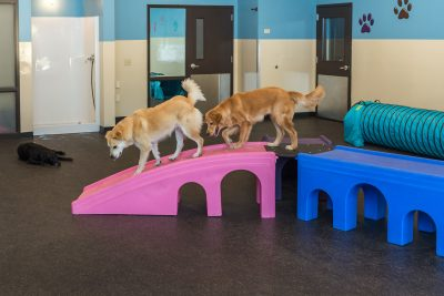 dogs walking on boxes