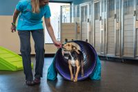 dog training in Loyal Companions Animal Hospital and Pet Resort