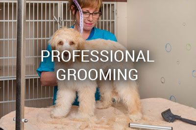 Female groomer haircut dog