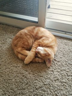 A ginger cat sleeps on a floor carpet