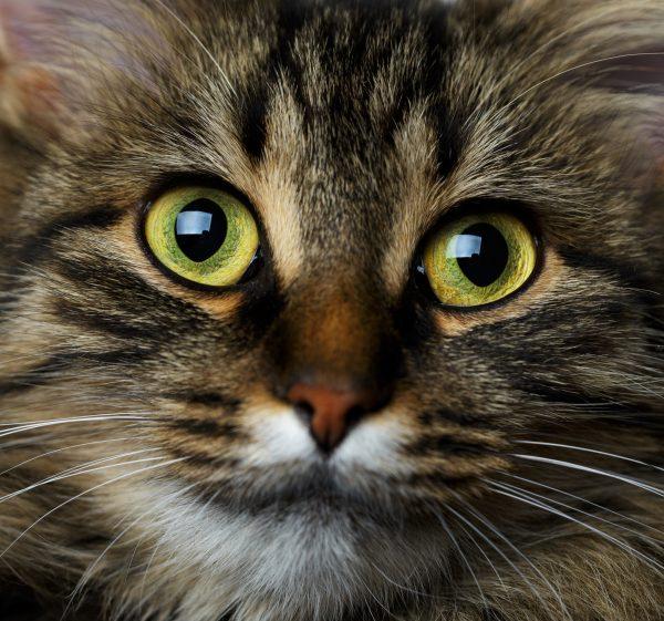 Cute muzzle tabby cat close up