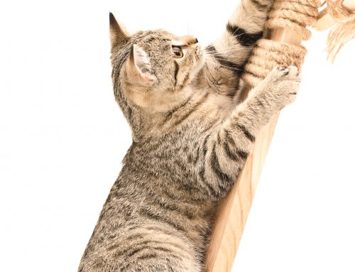 Feliscratch- helping to redirect your cat