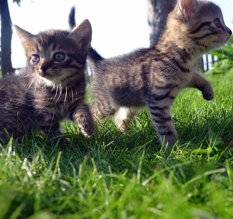 Cute Cat Family Pet Animal Happy Young Love