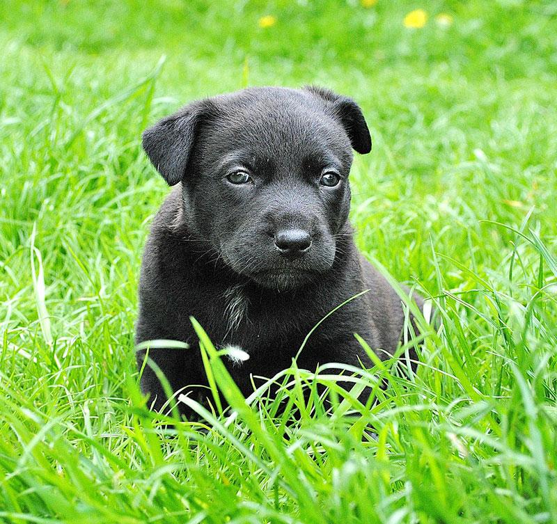Animal Portrait Puppy Small Dog Dog