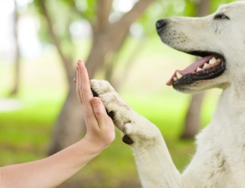 The importance of training your dog